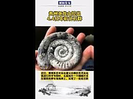 贵州尧龙山挖出4.4亿年前化石群