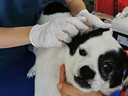 深圳犬只未植入芯片将被视为无证养犬