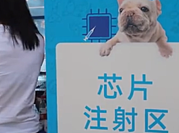 深圳犬只未植入芯片将被视为无证