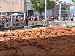 世界上最大的鸡排 面积足足70平方米
