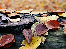 今年立秋节气是几月几日