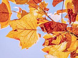 今年立秋具体的时间是几点几分?2020年立秋是几月几日