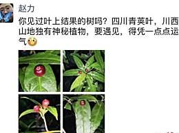 四川发现神秘植物