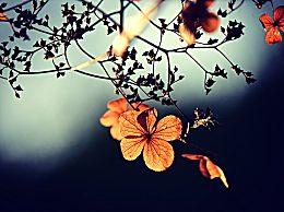 立秋诗词汇总感受诗词中的最美立秋