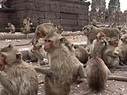 泰猴子泛滥成灾 游客锐减开始攻击路人