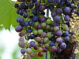 怎么洗葡萄又快又干净