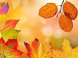 今年立秋具体的时间是几点几分?今年立秋是早秋还是晚秋