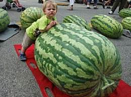 世界上最大的西瓜 比一个成年人还重