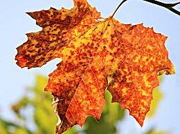 今天几点立秋