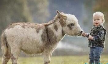 世界上最小的驴 体型比2岁的小孩还矮