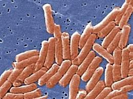 美国43州640人感染沙门氏菌 可能与在全美销售的洋葱有关