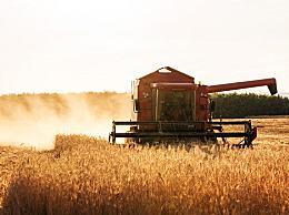 夏粮减产,粮食危机来了?