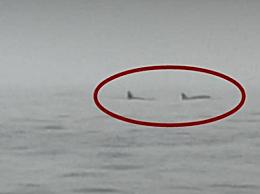 辽宁海域现大型海兽 专家:海兽部分特征接近于虎鲸