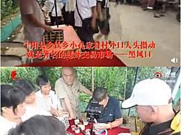 东宁阳县一只蛐蛐卖了11万 虫客能给全县带来6个亿左右产值