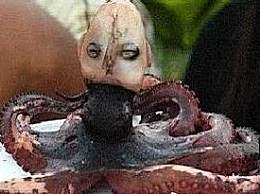 奇闻!印尼惊现章鱼人 头部像人还会哭