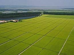 中国1.3亿吨粮食缺口引关注 粮食危机引发网友担忧