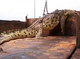 世界上最大的鳄鱼 体重超一吨