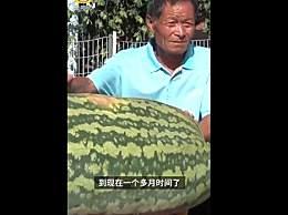 大爷种出160斤大西瓜
