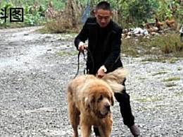 女子被藏獒吓撞车狗主人被判赔100多万 狗主人请牵好您的狗绳