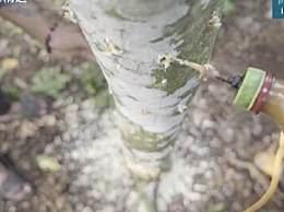 沉香木为什么这么贵