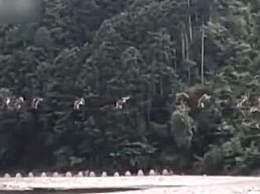 日本猴子走钢丝过河