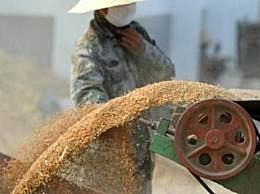 中国每年粮食产后损失700亿斤