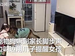 宠物狗帮女孩监听望风家长