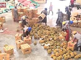 49吨榴莲销毁成有机肥 案值约120万元人民币