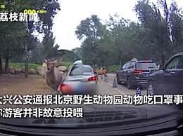 警方通报北京野生动物园动物吃口罩