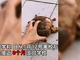 返校时乌龟变龟壳