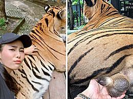 奇葩!泰国女游客抓老虎私处 简直太变态了!