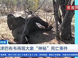 津巴布韦大象神秘死亡
