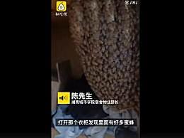 男寝接连发现蜂巢获1斤多蜂蜜