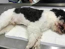 宠物狗咬伤小孩被摔死是怎么回事 宠物狗咬伤小孩被摔死始末回顾
