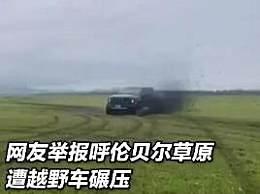 男子开车碾压草原被罚把草种回去