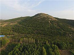 种树80万棵因非法占林被拘是怎么回事?荒山变森林公园为何反被拘