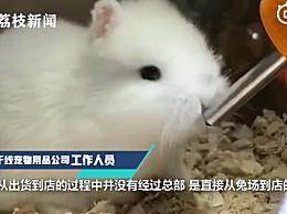 宠物店回应为抬价剪兔耳