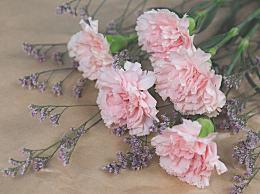 教师节送老师什么花代表什么寓意?教师节送花一般送几朵?