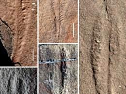 中美科学家发现5.5亿年前海底生物