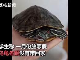 大学生8个月后返校乌龟还活着