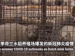 荷兰证实新冠病毒动物传人传播链 已捕杀100多万只水貂