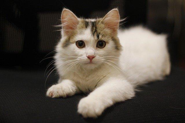 90后女孩睫毛上发现螨虫 螨虫不排除是从宠物猫身上感染而来