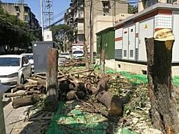 桂花巷树野蛮被砍 谁批准的