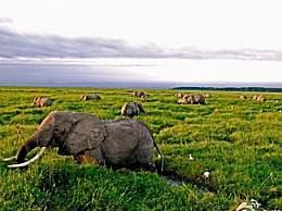 全球野生动物灭绝2/3 人类活动是这一变化的根本原因