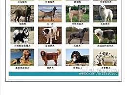 田园犬为何属禁养犬