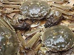 九月份吃公蟹还是母蟹?公蟹和母蟹有什么区别