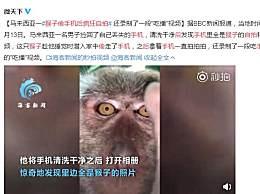 猴子偷手机后疯狂自拍