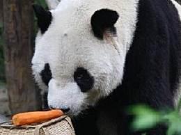 北京动物园通报去世大熊猫情况