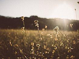 有关秋分的谚语有哪些?秋分谚语及解释汇总