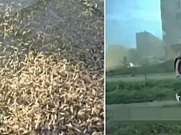 诡异 !数百万虫子袭击莫斯科 场面犹如世界末日